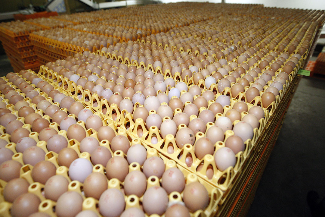 Met de naar verhouding scherpe prijsstijging van eieren voldeed de consument de rekening voor de overschakeling op een productie zonder het doden van de haankuikens, stelt consumentenmarktanalist Judith Dittrich vast. Foto: Bert Jansen