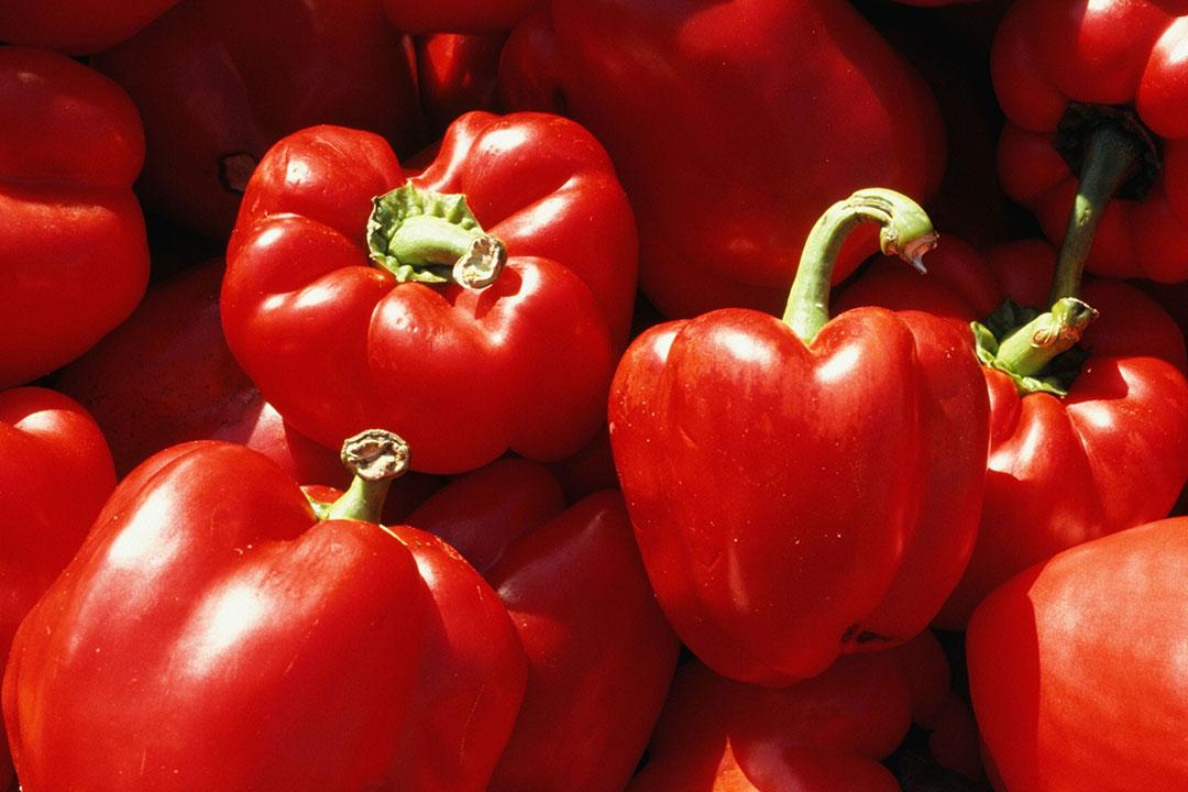 Rode paprika's voor consumptie. - Foto: Canva.com