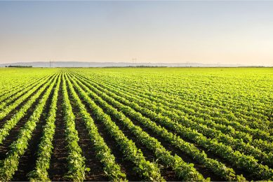 Veld met sojabonen. Van de in de EU gebruikte soja kwam 80% uit gebieden met een laag risico op ontbossing. Foto: Canva