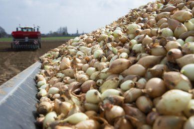 Plantuien gaan voorjaar 2021 in het Belgische Lafelt de grond in. - Foto: Twan Wiermans