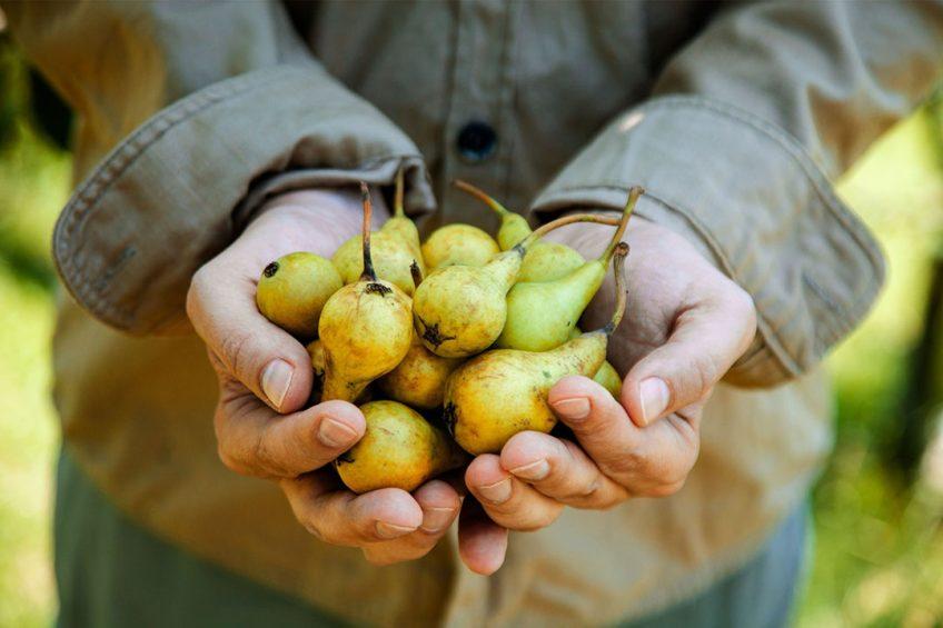 Op 10.070 hectare staan in ons land perenbomen geregistreerd. Hiermee is het oppervlak 1% hoger dan vorig jaar. - Foto: Canva