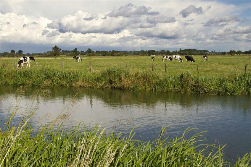 In zeven 'sleutelgebieden', waaronder de Gelderse Vallei, moet volgens het rapport niet alleen de stikstofuitstoot naar beneden, maar zijn ook droogte, waterkwaliteit, weidevogels, bereikbaarheid en verstedelijking onderwerp van aandacht. - Foto: ANP