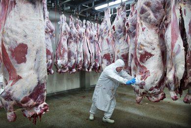 De afdeling uitbeenderij voor kalfsvlees van de Nederlandse VanDrie Group. - Foto: ANP