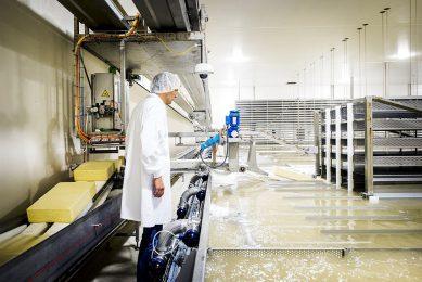 Beeld uit de kaasfabriek van FrieslandCampina in Workum (Fr.). - Foto: ANP