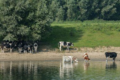 Fouten zijn onder meer gemaakt bij gronden in de uiterwaarden van de IJssel. - Foto: ANP