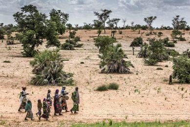 Een dorp in de Sahel. De strijd tegen woestijnvorming creëert banen en welvaart. - Foto: ANP