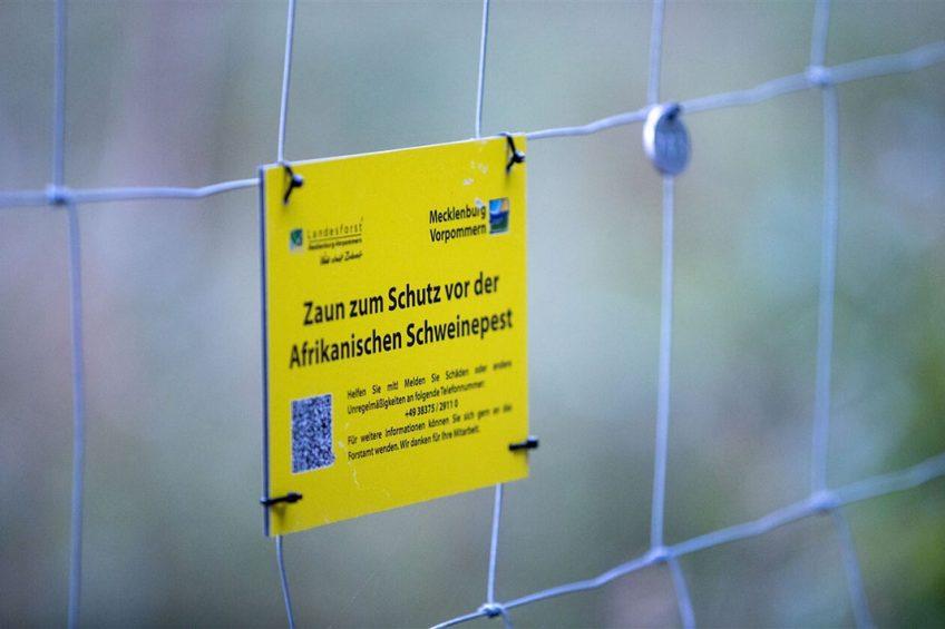 Afrastering op de grens tussen Polen en Duitsland om verspreiding van Afrikaanse varkenspest door wilde zwijnen te stopen. - Foto: ANP