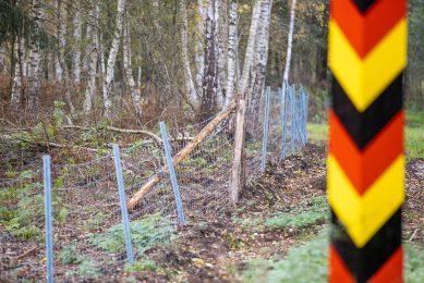 Het Duitse Bauernverband wil onder meer een dubbele afrastering om zwijnen uit Polen te weren. - Foto: ANP