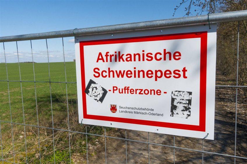 Langs de 255 kilometer lange grens is de verplaatsbare afrastering met stroomdraden geheel vervangen door een vaste afrastering met gaas.  - Foto: ANP