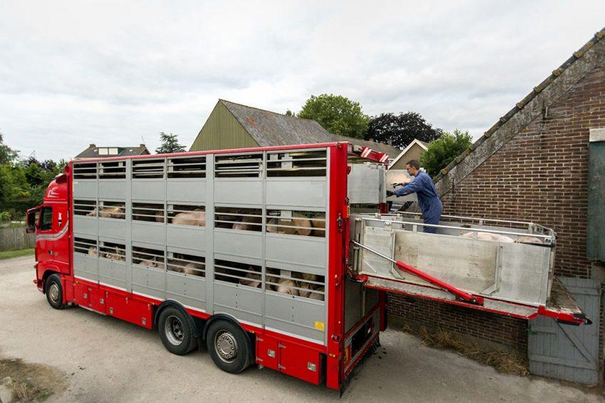 Het laden van varkens bij een varkenshouder. - Foto: Roel Dijkstra