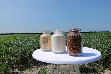 Van rechts naar links: veldbonen, veldbonenmeel en texturaat van veldbonen. Foto: Misset