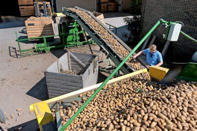 Inschuren van biologische aardappelen. Voor de Nederlandse markt zijn er voldoende biologische aardappelen beschikbaar. - Foto: Ronald Hissink