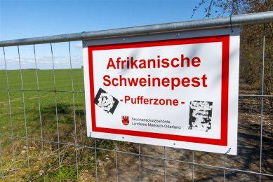 Recent werd het hekwerk langs de Poolse grens afgemaakt om verdere insleep van Afrikaanse varkenspest door Poolse wilde zwijnen tegen te gaan. - Foto: ANP