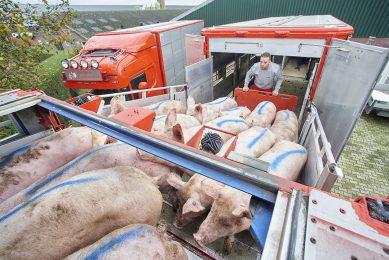Het laden van vleesvarkens bij een varkenshouders. - Foto: Van Assendelft