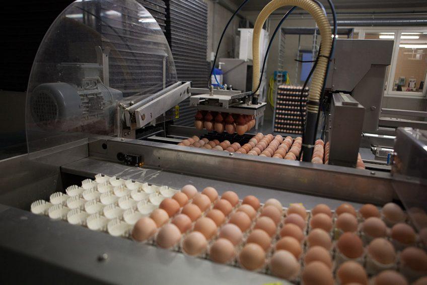 Verzamelen van eieren. - Foto: Wageningen UR