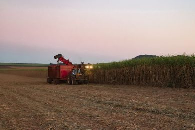 Oogsten van suikerriet in Brazilië. - Foto: Canva
