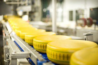 Productie van Bel Leerdammer kaas. - Foto: Misset