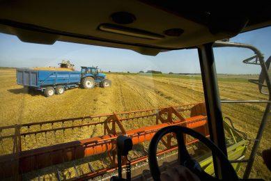 Het weer ontwikkelt zich in de EU ongunstig voor de oogst van gerst en tarwe. Foto: Canva