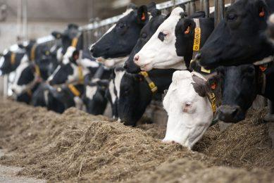De afspraken hebben betrekking op veevoermaatregelen, meer beweiden en mest verdunnen. - Foto: Mark Pasveer