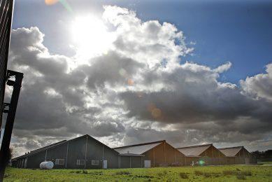 Koolen kocht het voormalige pluimveebedrijf in Groesbeek in 2016. Een jaar later werden plannen gelanceerd om er een zuivelfabriek te beginnen. De locatie is onlangs verkocht aan een projectontwikkelaar die er 200 woningen wil bouwen. - Foto: Hans Prinsen