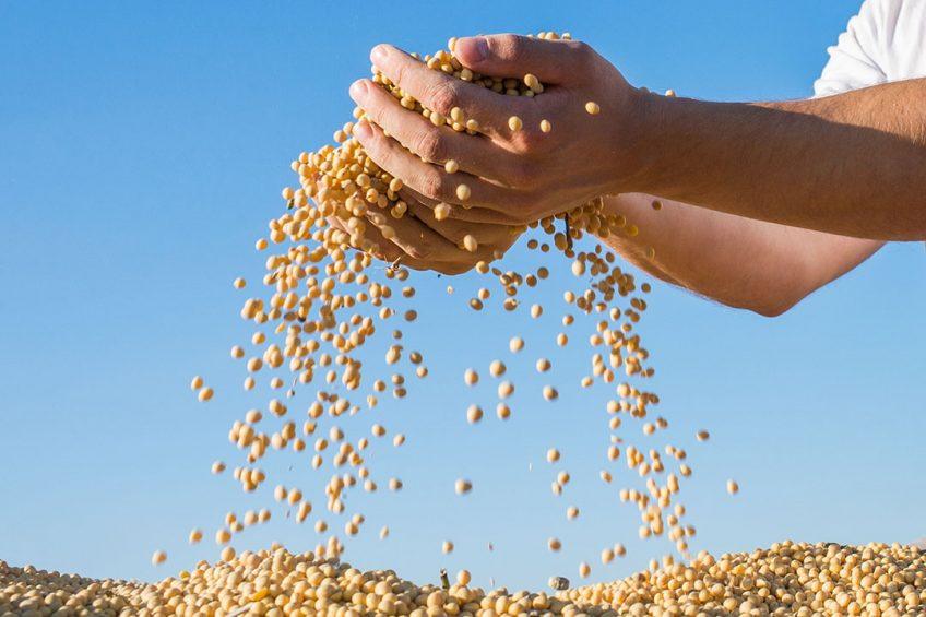 De toegenomen binnenlandse varkensvleesproductie zorgt ervoor dat er meer vraag is naar veevoer. Dat is terug te zien in de import van soja, mais en graan. Foto: Canva