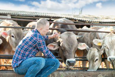 Melkveehouders in de VS komen in aanmerking voor een vergoeding van 80% van de gedaalde inkomsten per maand. - Foto: Canva