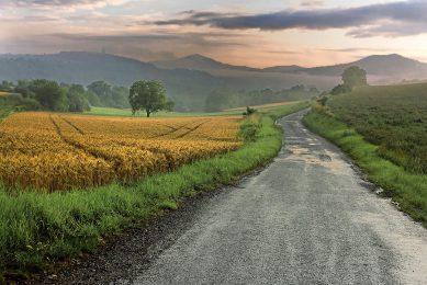 Graanvelden in Frankrijk hebben te lijden onder de vele regen. - Foto: ANP
