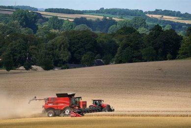 De Britten telen dit jaar op 1,62 miljoen hectare tarwe. - Foto: ANP