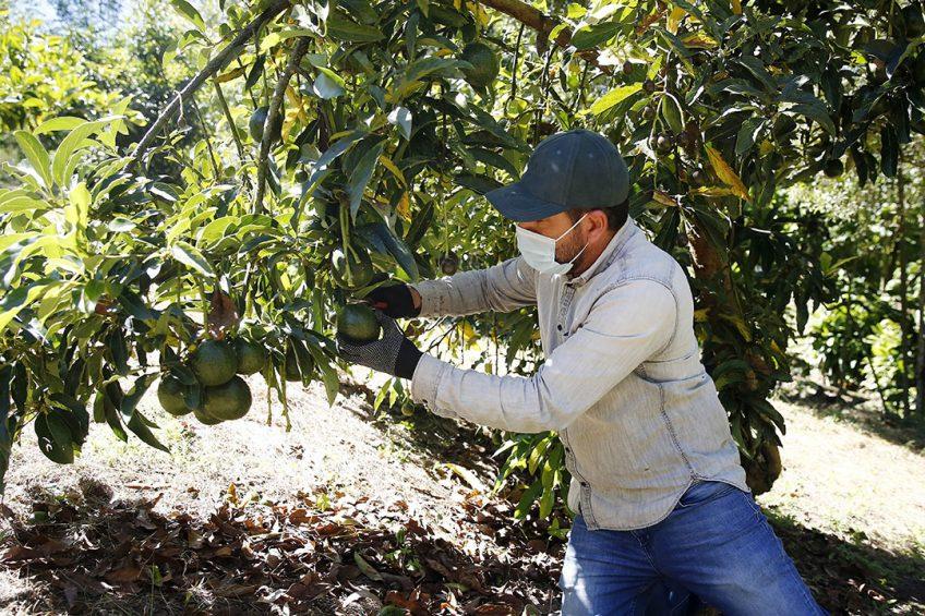 Handelsbedrijf Jaguar is specialist in de import van overzees fruit. - Foto: ANP