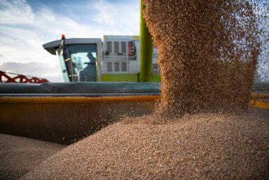 De totale graanproductie wordt nu geraamd op 2.283 miljoen ton. - Foto: Mark Pasveer