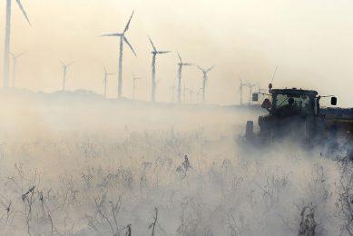 Afbranden van loof in biologische aardappelen in Flevoland. - Foto: Hans Prinsen