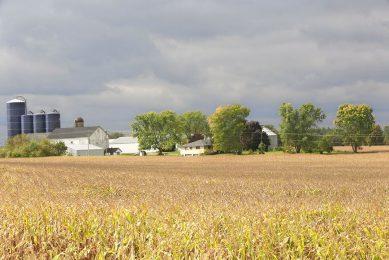 Welkome regen in de Amerikaanse Corn Belt temperde de prijzen op de termijnmarkten. - Foto: Henk Riswick