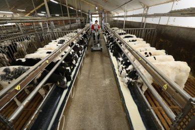 Dankzij lange leegstand is het aanbod vleeskalveren beperkt, terwijl de vraag voor de tijd van het jaar prima is. - Foto: Henk Riswick