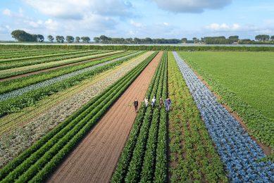 Bio-landbouw in stroken. 25% bio in 2030 is een van de ambities van Farm-to-Fork. - Foto: Peter Roek