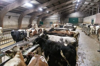 Handel op veemarkt. - Foto: Herbert Wiggerman