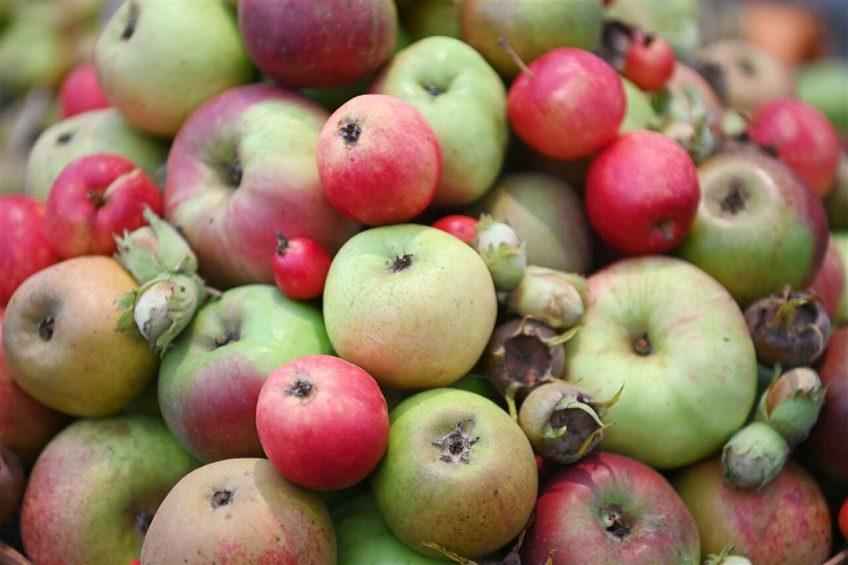 De meeste meldingen van een verontreiniging zijn vorig jaar gedaan over groenten en fruit. - Foto: ANP