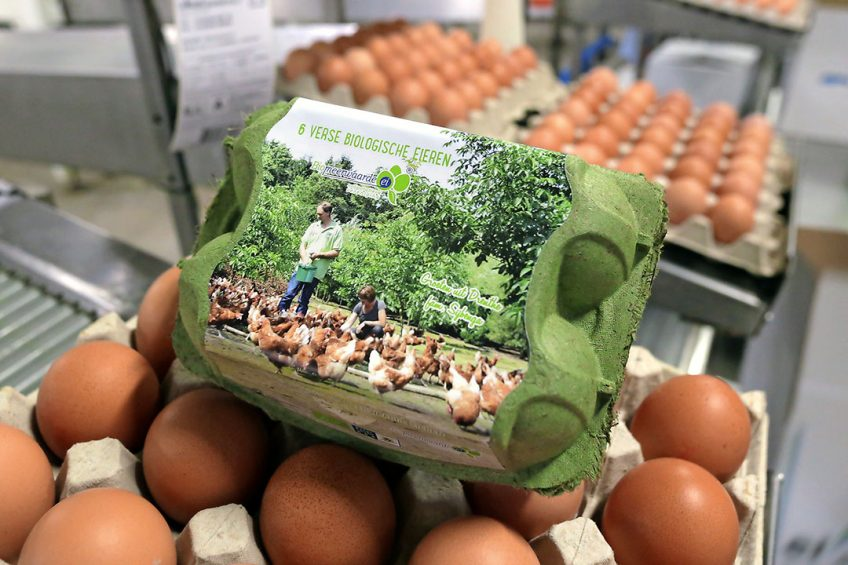 De afzet van biologische eieren heeft potentie te groeien. De afzet is in belangrijke mate afhankelijk van Duitsland. - Foto: Ton Kastermans Fotografie