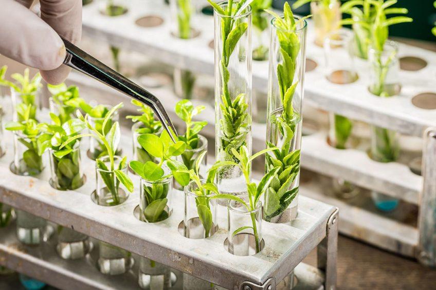 Branchevereniging Plantum zegt dat de nieuwe regelgeving ervoor zorgt dat ook bij kleinere gewassen voldoende stimulans blijft bestaan voor rasvernieuwing. - Foto: Canva