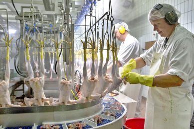 Pluimveeslachterij. De Duitse brancheorganisatie Zentralverband der Deutschen Geflügelwirtschaft wil dat Duitsland dé standplaats voor pluimveevleesproductie wordt. - Foto: Anne van der Woude