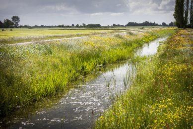 Voorstel is om bufferstroken aan te leggen van 5 meter breed langs ecologisch kwetsbare waterlopen. - Foto: René den Engelsman