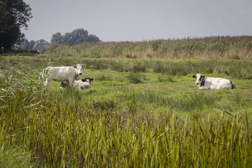 Boeren bij een Natura 2000-gebied. - Foto: Koos Groenewold