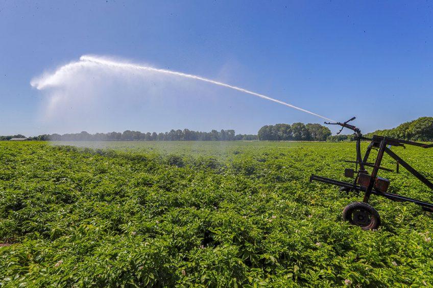 Lidstaten in de EU geven boeren te veel vrijstellingen voor het gebruik van zoet water, vindt de Europese Rekenkamer. - Foto: Bert Jansen
