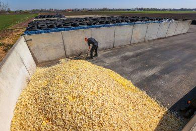 Bijproducten in de voerkuil van een varkenshouder. - Foto: Bert Jansen