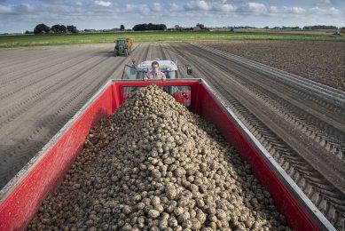 Oogst van aardappelen. - Foto: Mark Pasveer