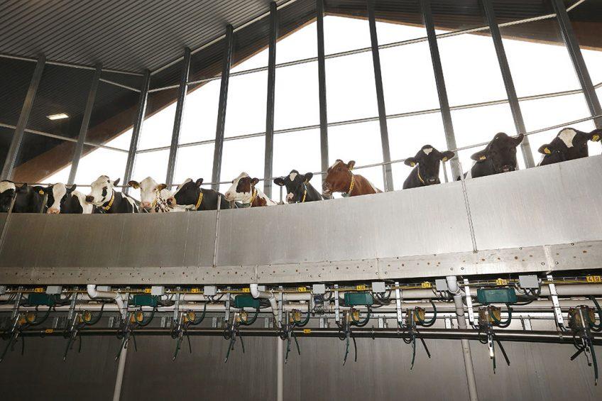 Vreba Melkvee is het grootste melkveebedrijf van Nederland met ruim 2.500 koeien en runt naast de boerderij in Vredepeel diverse andere melkveebedrijven. Foto: Hans Prinsen