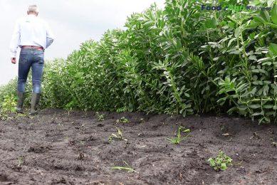Onderzoek naar eiwitrijke gewassen in project Fascinating