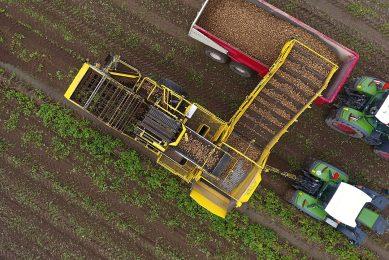 Oogst van aardappelen in Limburg, medio augustus dit jaar.  - Foto: Henk Riswick