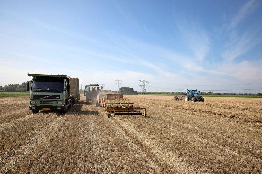Stro wordt half augustus verwerkt op een spaarzame droge dag. - Foto: Peter Roek