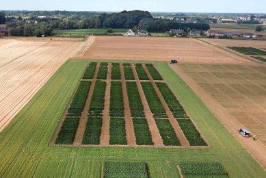 De sojaproefvelden van Protealis. Protealis veredelt sojagewassen in Europa. Foto: Protealis