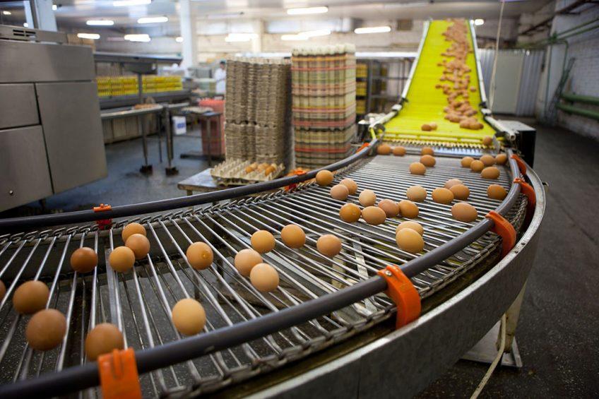 In 2019 steeg de eierproductie in Oostenrijk met 1,3%, vorig jaar zelfs met 3,8%. - Foto: Canva